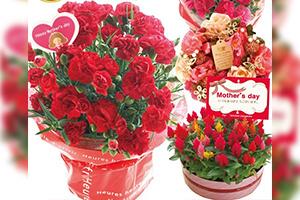 選べる花鉢&リース